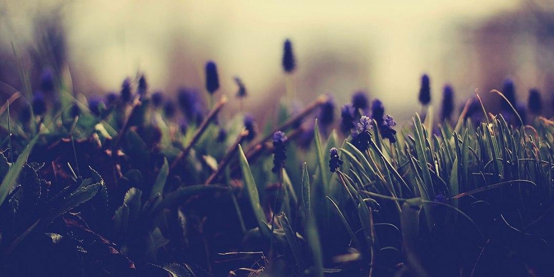 Flowers-Nature-l